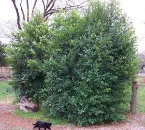 Large bush_opt
